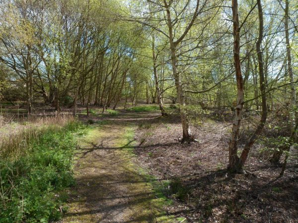 Hersey Nature Reserve Woodland