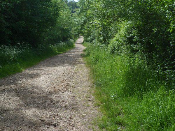 Quarr Walk